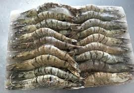 Raw Black Tiger Prawns-Whole 1kg
